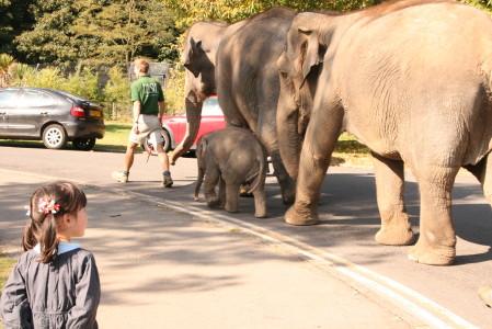 動物園_b0027781_3462476.jpg