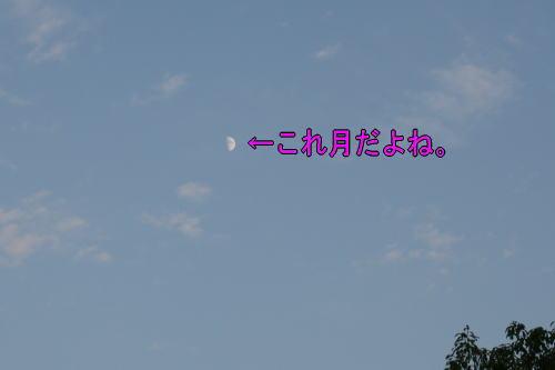 b0136683_9351385.jpg