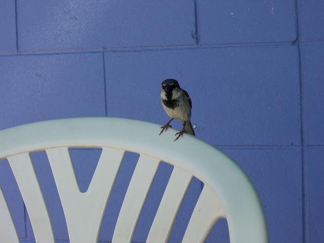鳥の楽園 ケアンズの魅力_d0116009_2292697.jpg