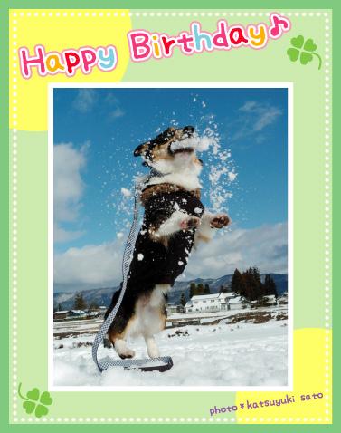 ダンケくん、お誕生日おめでとう♪_d0102523_9275159.jpg