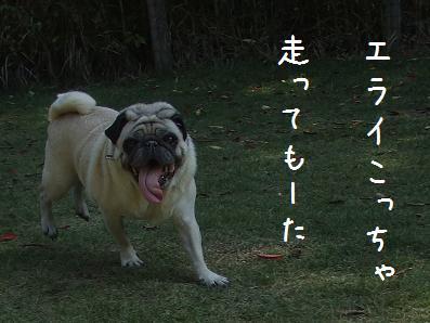 d0074531_13333159.jpg