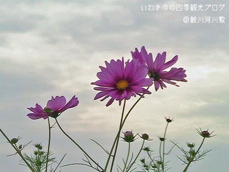f0105342_1110035.jpg