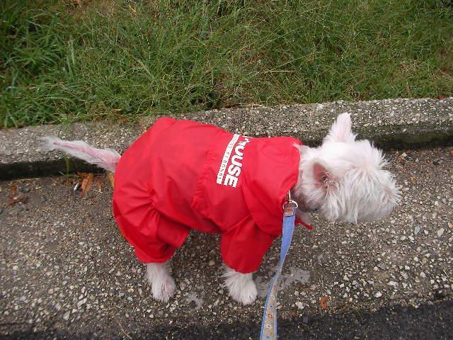 雨の日散歩♪_f0034444_23433770.jpg