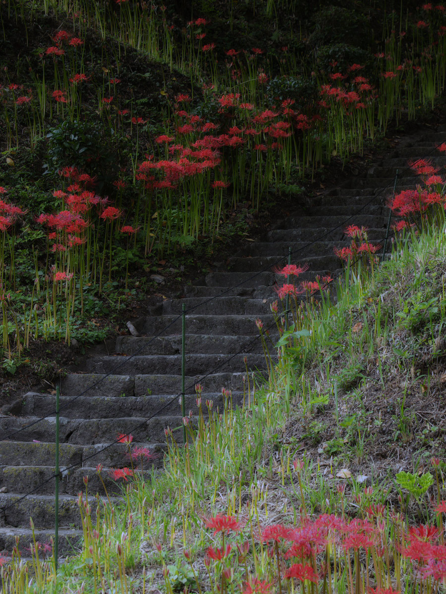 奈良 オフ会 仏隆寺  1_f0021869_17295613.jpg