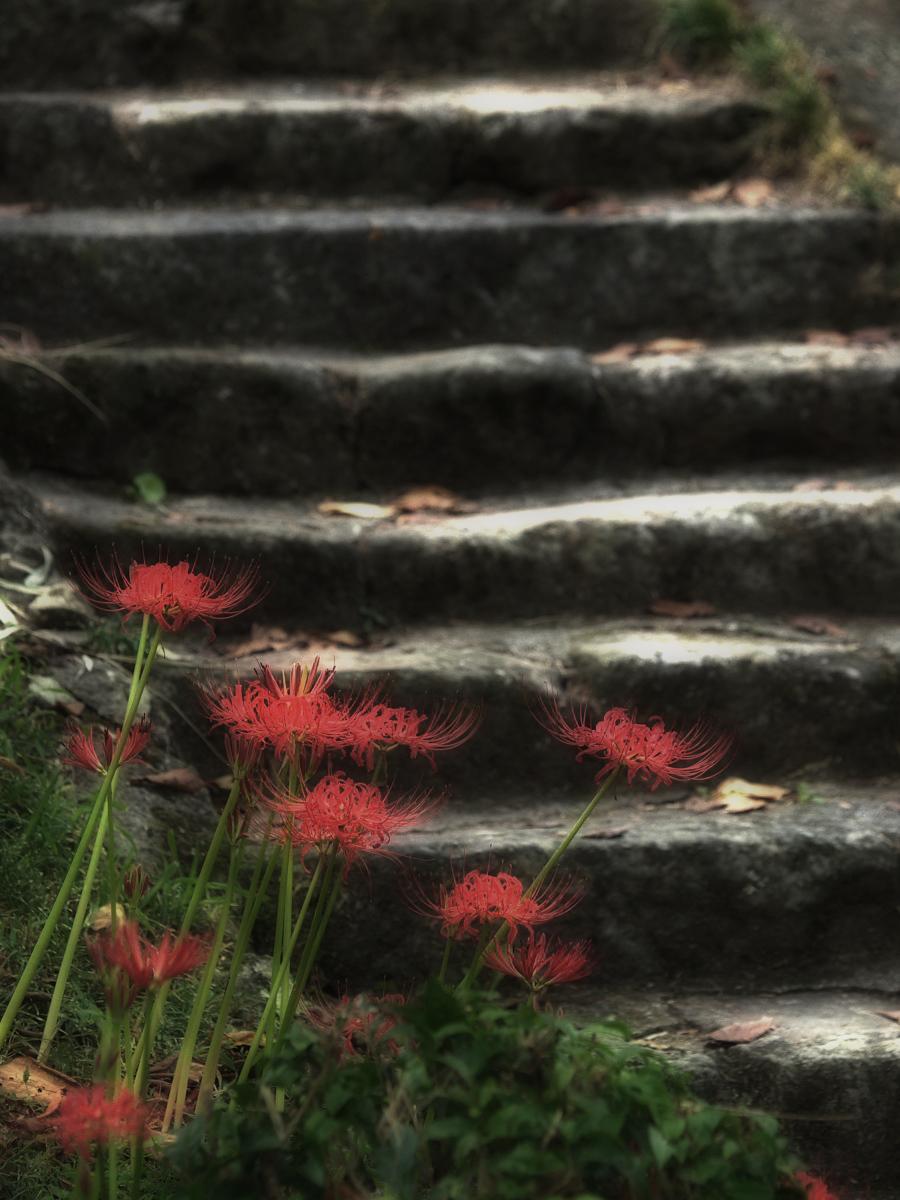 奈良 オフ会 仏隆寺  1_f0021869_1733832.jpg