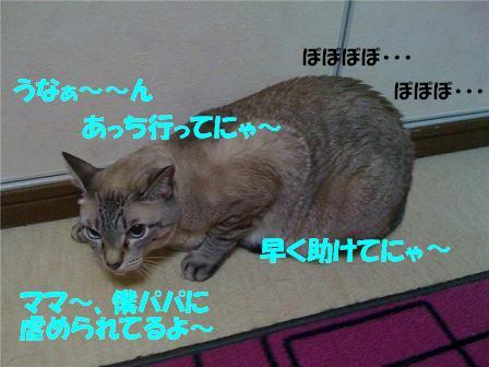 a0113070_0235166.jpg