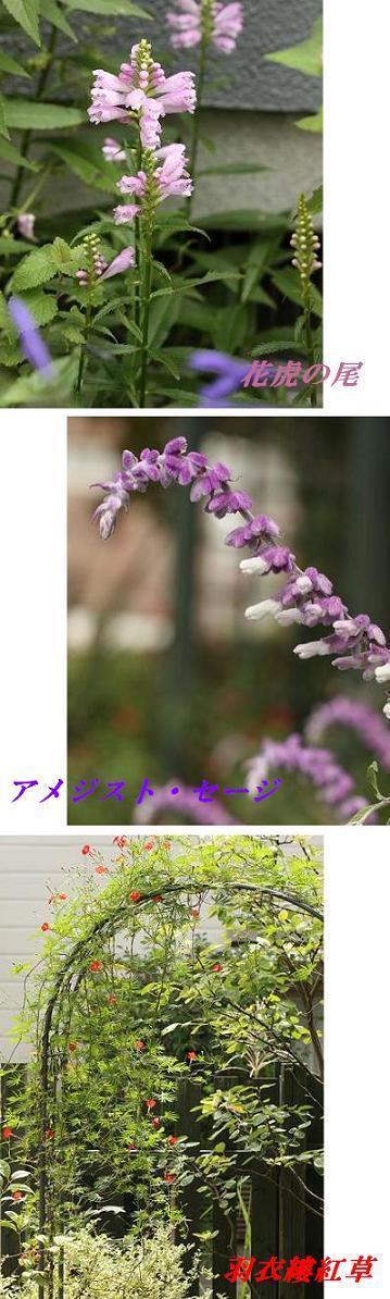 f0191986_8244755.jpg