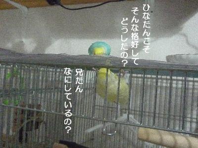 b0062090_1473932.jpg
