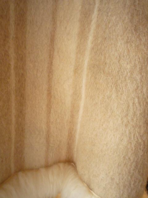 千原ジュニアと宮川大輔のすべらないはなし_f0180307_1449215.jpg