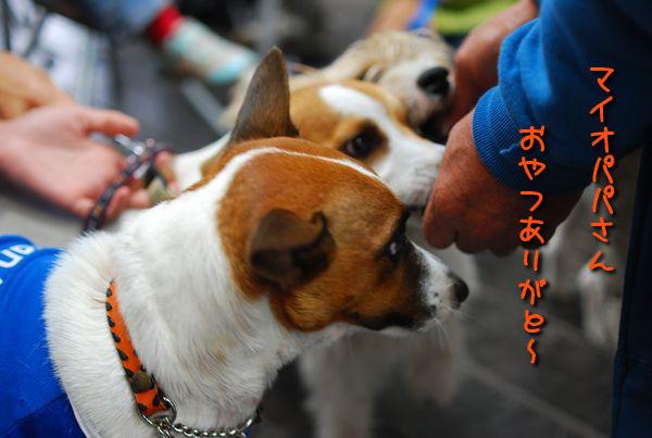 f0203612_1620926.jpg