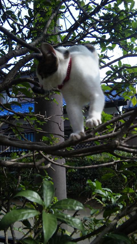 木登り猫_f0165126_23313087.jpg