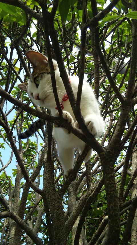 木登り猫_f0165126_23313091.jpg