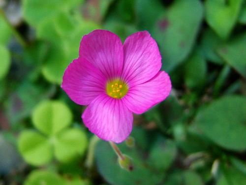 宝蔵院の花 その2(写真10枚)_e0089232_2010087.jpg