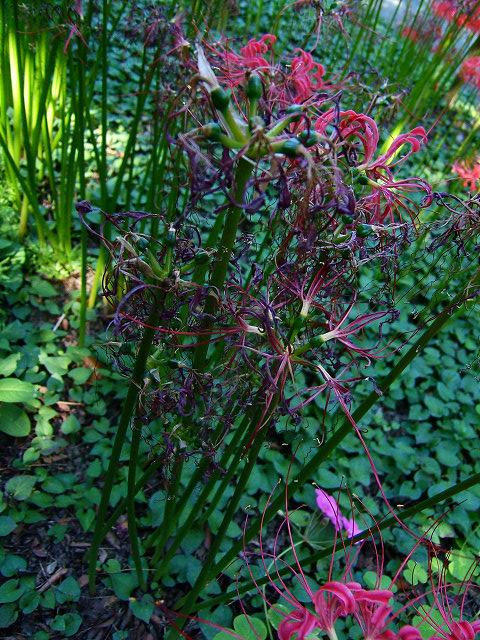 宝蔵院の花 その2(写真10枚)_e0089232_20101355.jpg