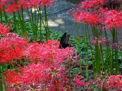 宝蔵院の花 その2(写真10枚)_e0089232_20101429.jpg