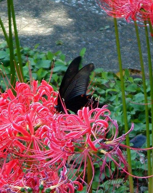 宝蔵院の花 その2(写真10枚)_e0089232_20102226.jpg