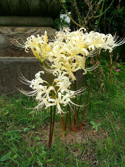 宝蔵院の花 その2(写真10枚)_e0089232_2091411.jpg