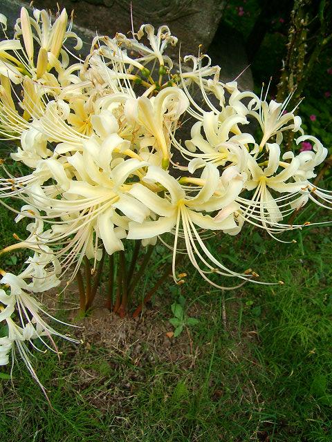 宝蔵院の花 その2(写真10枚)_e0089232_2093254.jpg
