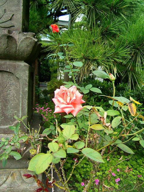 宝蔵院の花 その2(写真10枚)_e0089232_2094056.jpg