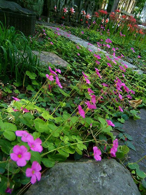 宝蔵院の花 その2(写真10枚)_e0089232_2095339.jpg