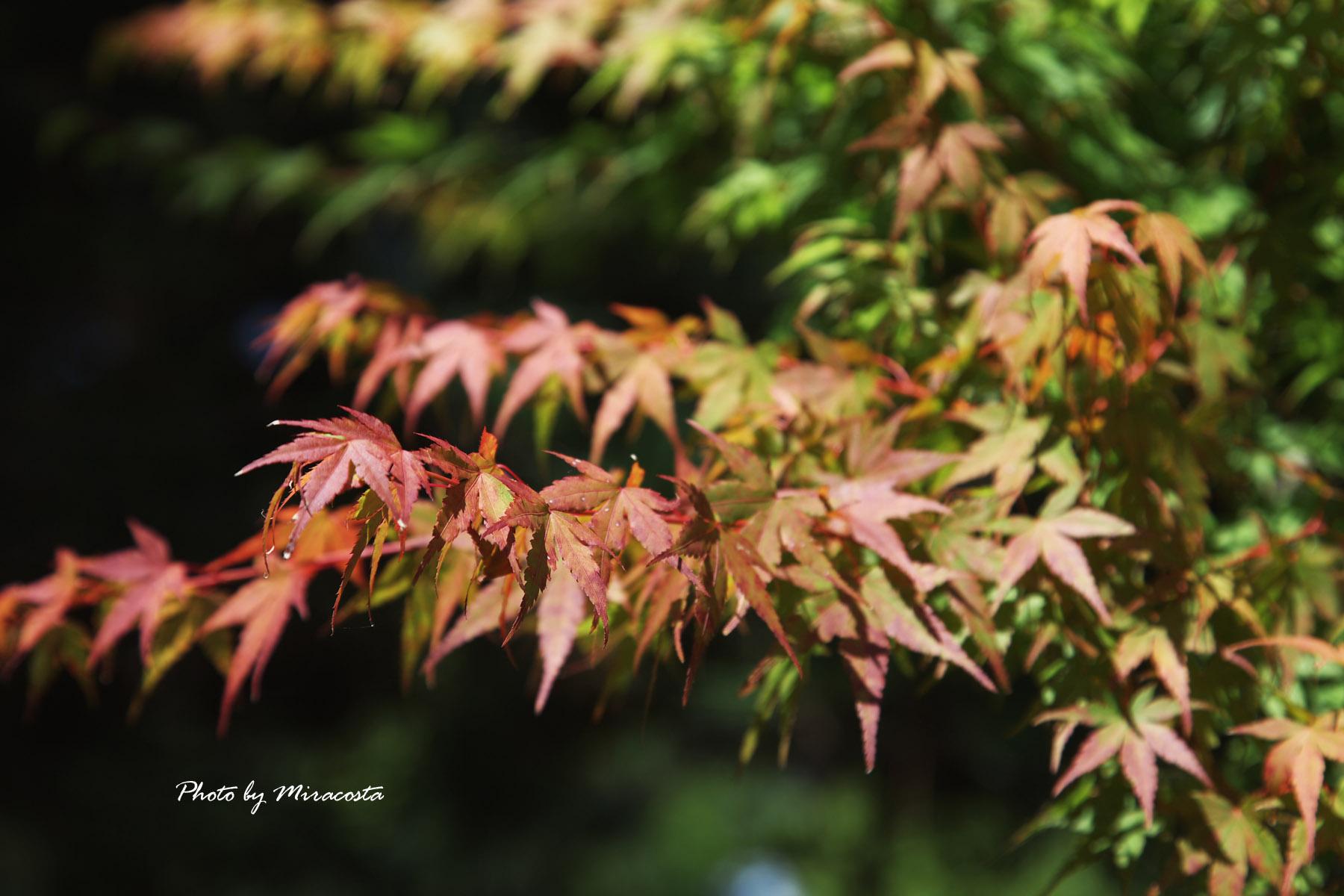 秋も間近かな・・_e0140159_22265193.jpg