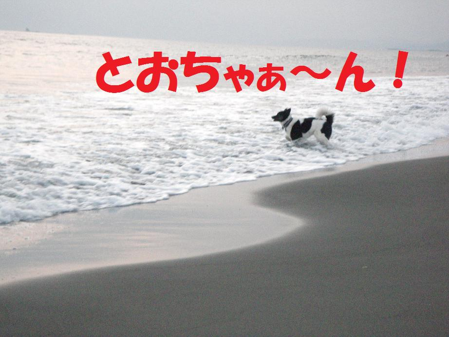 a0104464_1041484.jpg