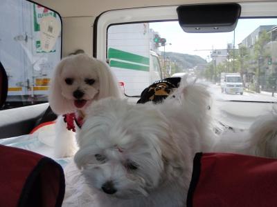 ドライブが日課になりつつ〜ご機嫌5マルちゃん_b0001465_1905962.jpg