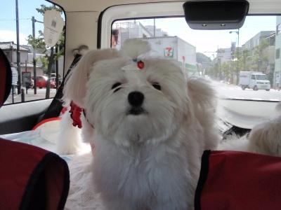 ドライブが日課になりつつ〜ご機嫌5マルちゃん_b0001465_1911995.jpg