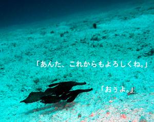 f0144385_8201526.jpg