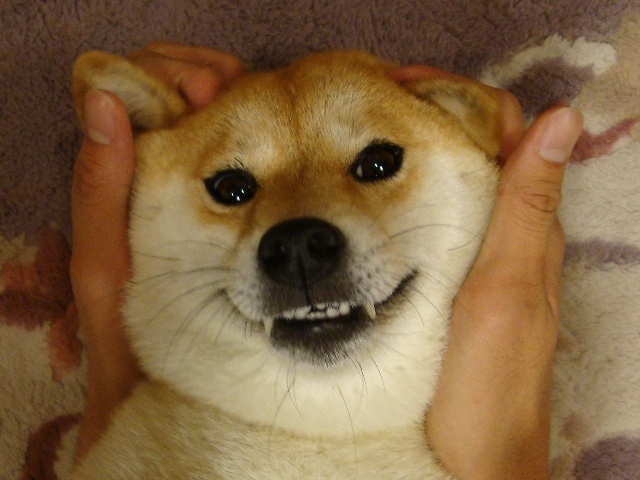 かぼちゃんのお顔は_a0126590_22564536.jpg