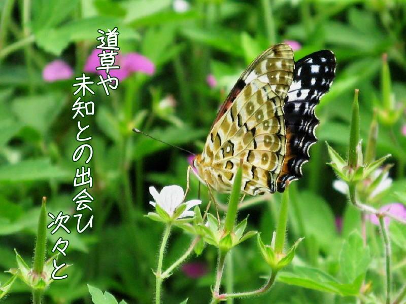f0137096_15213553.jpg
