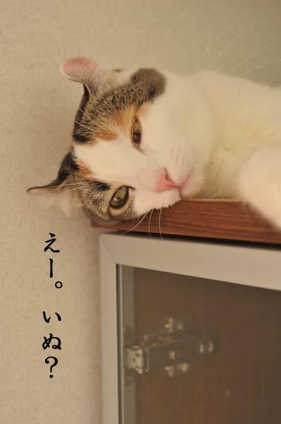 b0141397_1262996.jpg