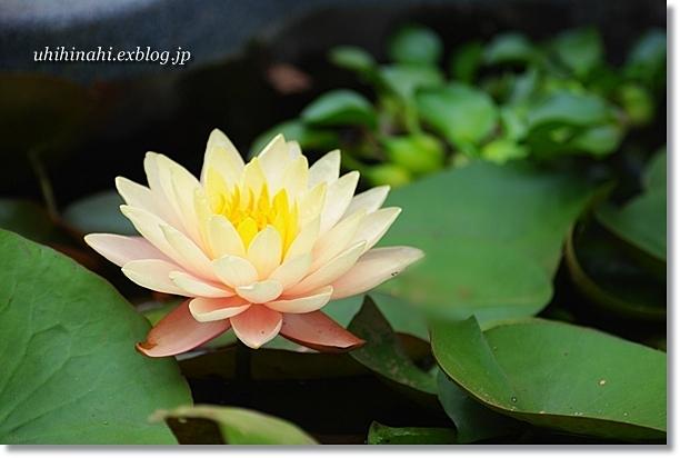 豆腐とお豆のシンプルサラダ_f0179404_2150489.jpg
