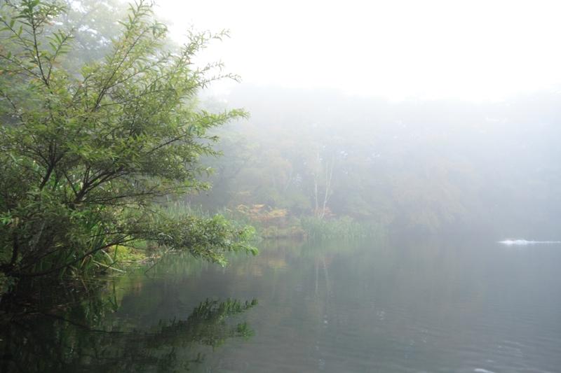 霧の雲場池_f0091207_12301778.jpg