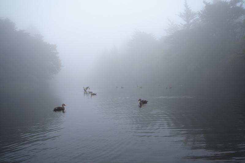 霧の雲場池_f0091207_12312463.jpg