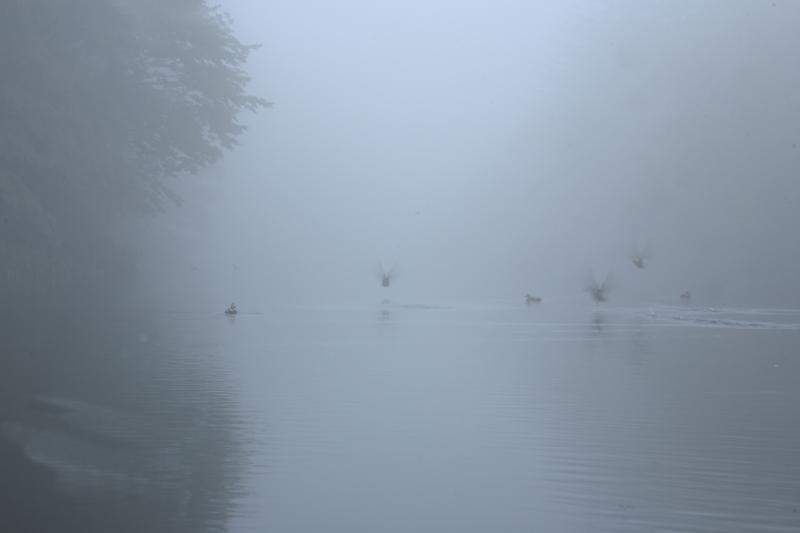 霧の雲場池_f0091207_1232271.jpg