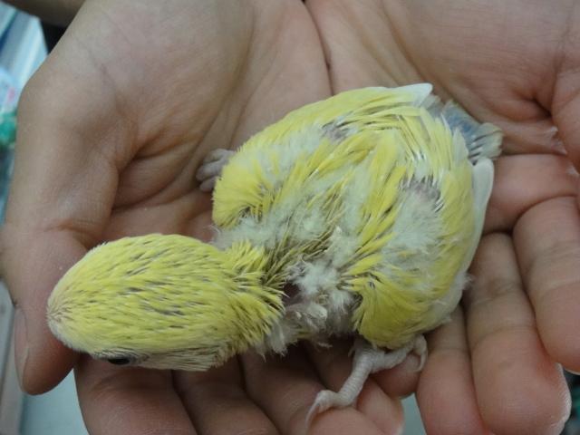 インコ・文鳥・ウサギ・ハムスター_f0189122_1693856.jpg
