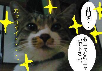 c0177527_312114.jpg