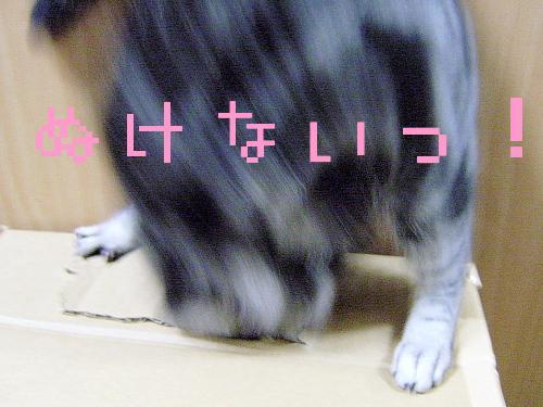 f0175434_091517.jpg