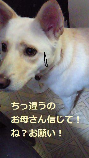 f0195543_041432.jpg