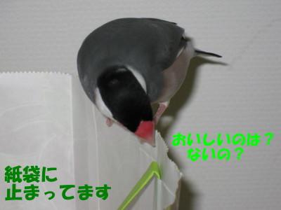 b0158061_2233011.jpg