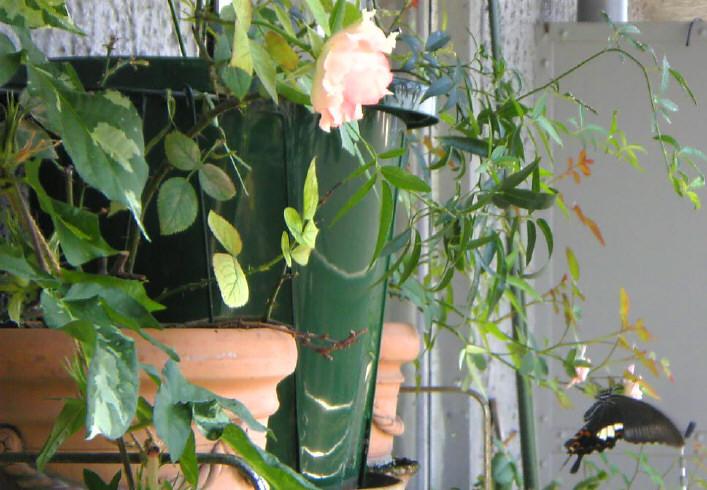 さよなら、ベランダのお花たち。_e0116563_14415537.jpg