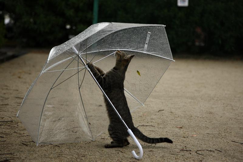 876  君にあげたい傘_c0049767_9204930.jpg