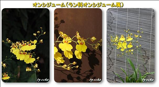 f0104569_9535425.jpg