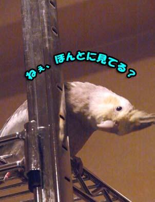 c0133013_14195621.jpg