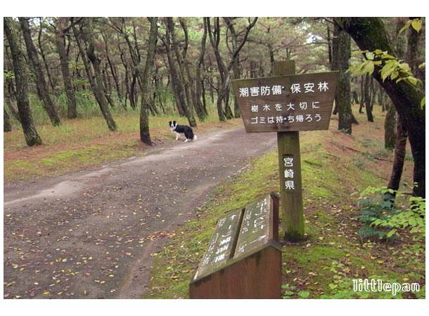 f0174914_9313689.jpg
