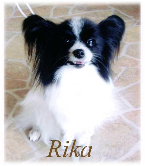 愛犬_f0200428_1412524.jpg
