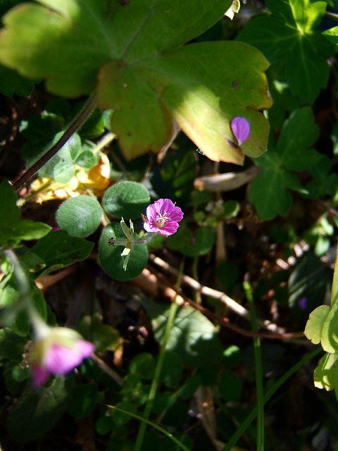 鎌倉公園の野草園(写真12枚)_e0089232_18535241.jpg