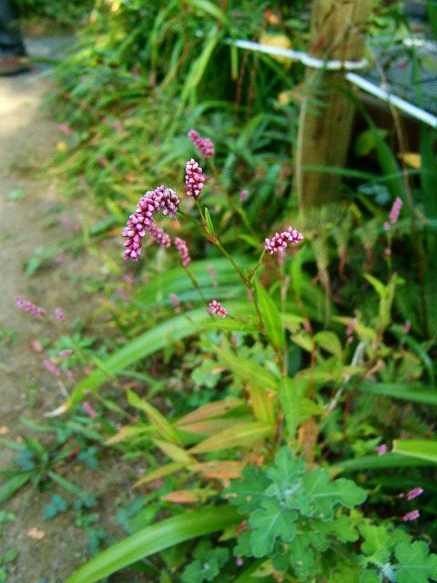 鎌倉公園の野草園(写真12枚)_e0089232_18542310.jpg