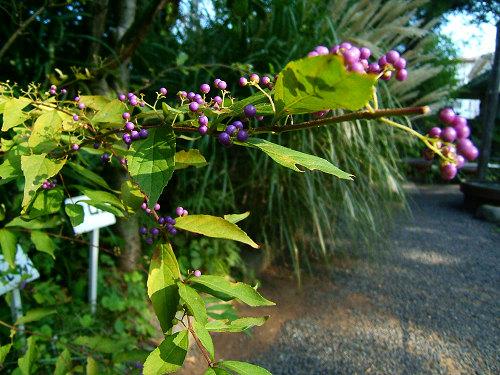 鎌倉公園の野草園(写真12枚)_e0089232_1854511.jpg